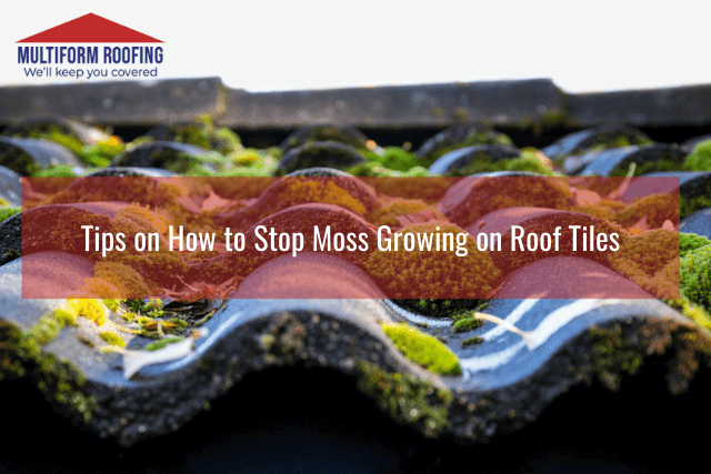 Tips on How to Stop Moss Growing on Roof Tiles